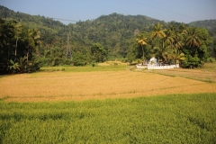 Somewhere between Kandy and Dambulla