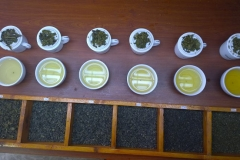 Tea tasting at Newburgh Green Teas, Ella