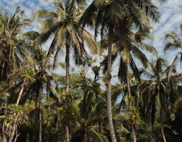 Panamá – Bocas del Toro & San Blas